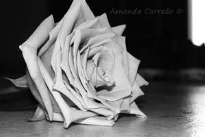 Forgotten memories I by mandy-c