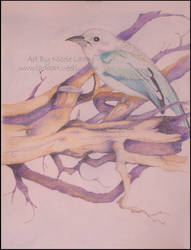 A Bird by KleinerSchelm