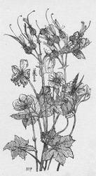 Cranesbills and butterflies, Inktober 8-2017 by MirielVinya