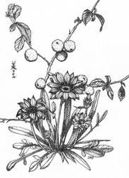 Flowering quince and gazania, Inktober 12-2017 by MirielVinya
