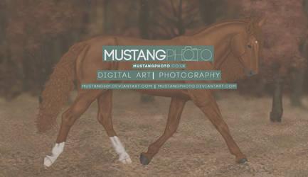 New DA ID by MustangPhoto