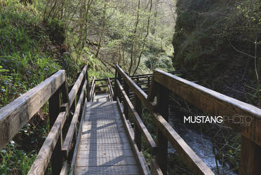 Pathways by MustangPhoto