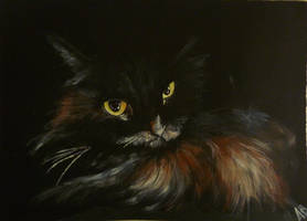 Sfigatto :) ...last but not least of my 6 cats :) by WormholePaintings