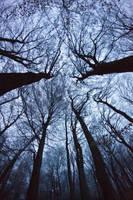 Dark branches by luka567