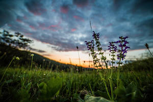 On the meadow in the evening by luka567