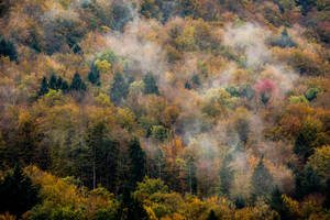 In the heart of autumn by luka567