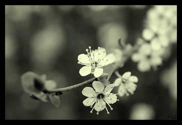 it feels like spring... by ahmedwkhan