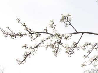 branch by akikospirit