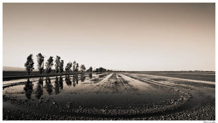 Delta by Hgonzag
