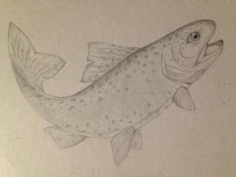 Trout drawing by Ceruleansketchcat