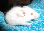 Deku scrub mouse by MaguschildCloud