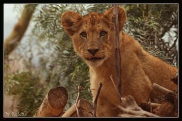 Little Lion Tongue by shutterbugmom