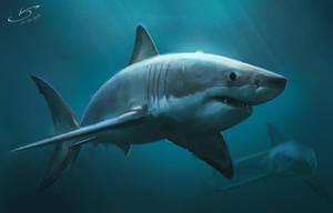 White Shark study by VSales