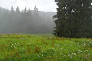 Misty green by Tali-esin