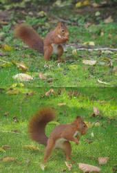Red Squirrel by Nefermeritaset