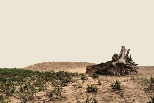 beach desert driftwood stock by Moon-WillowStock