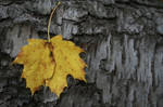 just a leaf texture 7308 by Moon-WillowStock