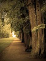 +Tree Path+ by Dra-Matha