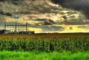 Corn field by KarelSopek