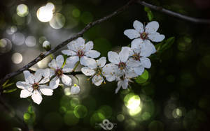 Springs Blossoming by l8