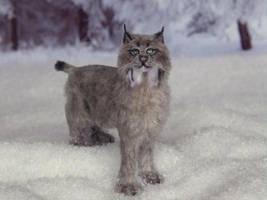 Canadian Lynx by AnyaStone