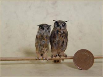 Eagle Owls by AnyaStone