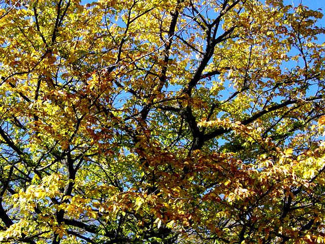 fall leaves by vespertinex