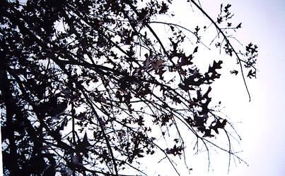 bw leaves by vespertinex