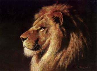 Gaze - Lion by cheungchungtat