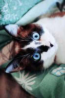 Cat by Leona-Snow