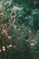 Flores by Leona-Snow