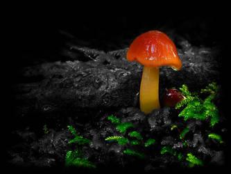 Mushroom by darkmiko-911