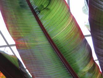 Rainbow Leaf by SilmarwenI