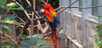 Macaw by GothicRavenGoddess