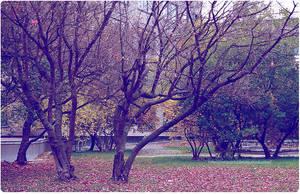 autumn3 by CrazyDD