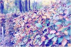 autumn6 by CrazyDD