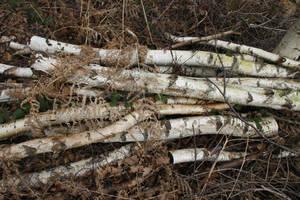 Birch Tree Logs by Kitsch-Craft