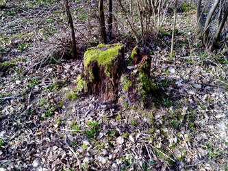 Mossy Tree Stump by Kitsch-Craft