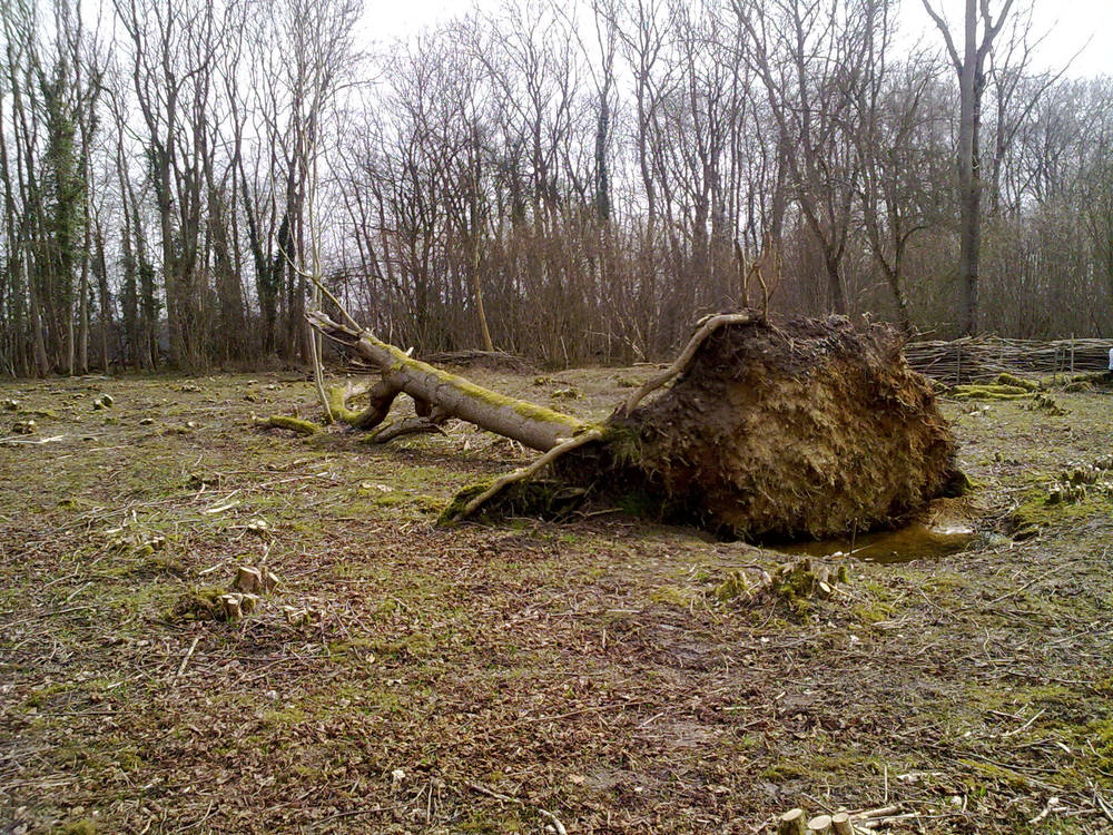 Fallen Tree by Kitsch-Craft