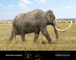Woolly Mammoth by Rom-u