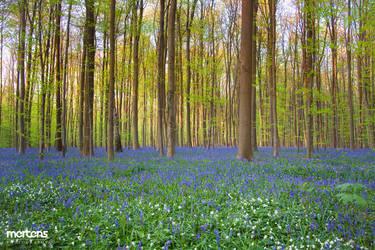 Purple Woods by cRomoZone