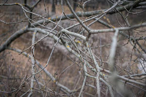 White branches by Kelshray-photo
