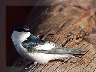 Swallow the Pride by seek-and-hide