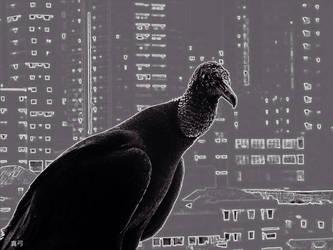 Urban Vulture by seek-and-hide