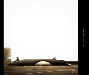 lonely whale by inflight