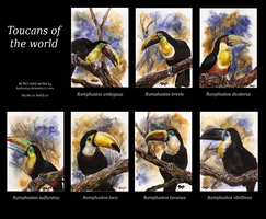 TOUCANS aceos by kailavmp