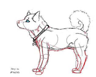 Husky sketch XD by Midnightxo