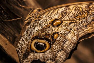Moth by Aerith-19