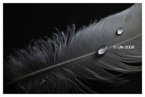 feather and droplets by brokendrumstick