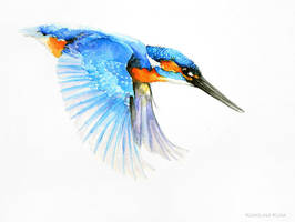 kingfisher watercolor by Kakiaart